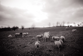 Jo-Anne McArthur - Farm Sanctuary
